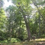 WhOakForest