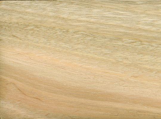 Eucalyptus-viminalis