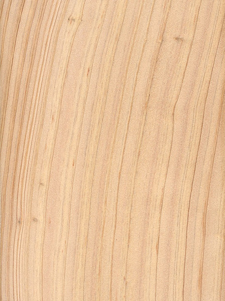 atlantic-white-cedar