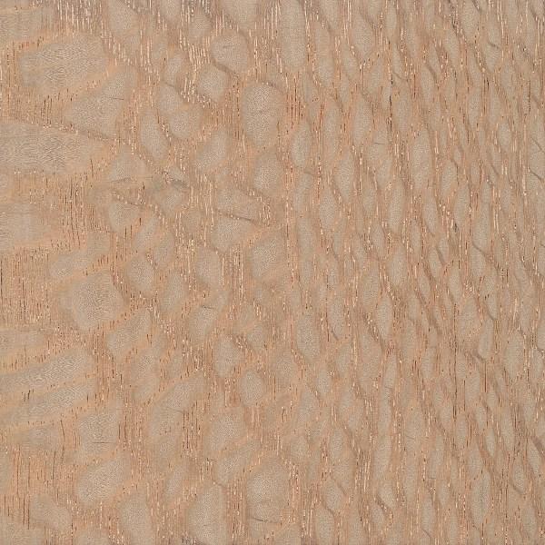 brazilian-lacewood (1)