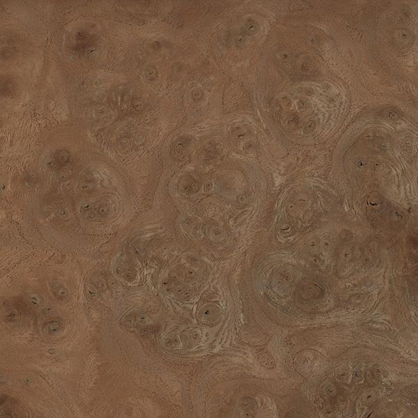 carpathian-elm-burl